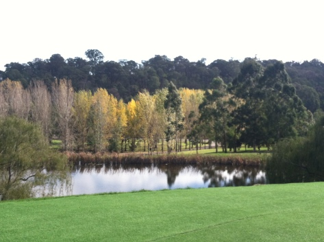 A view of the landscape at TarraWarra Museum of Art in Healesville, Australia (the Yarra Valley).