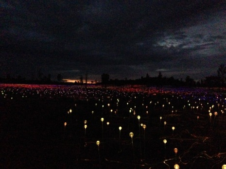 Dawn approaching at the Field of Light installation. Munro visited Uluru in 1992 and was inspired to become an artist. That same visit inspired this installation.