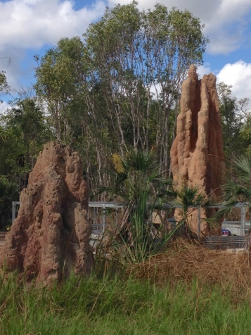 More giant termite mounds. Somehow these tiny armies of termites build these on a north-south axis to protect the interiors from the brutal sun!