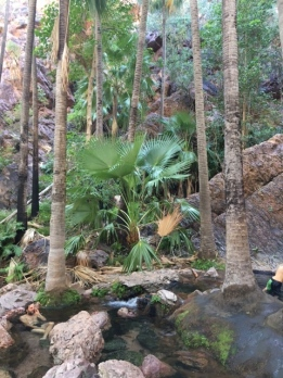 Zebedee Springs--nothing better than a hot soak in a this tropical setting...until a small snake swam by my left shoulder!
