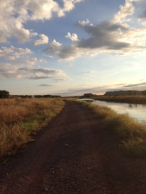 View of one of the many irrigation channels in Kununurra, a great dog walking spot.