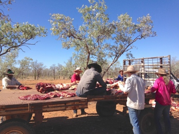 Cutting the beef into small pieces that will be injected with a natural toxin not harmful to the environment and other wild life. Done during the dry season, pieces are scattered around near water and the surrounding area.