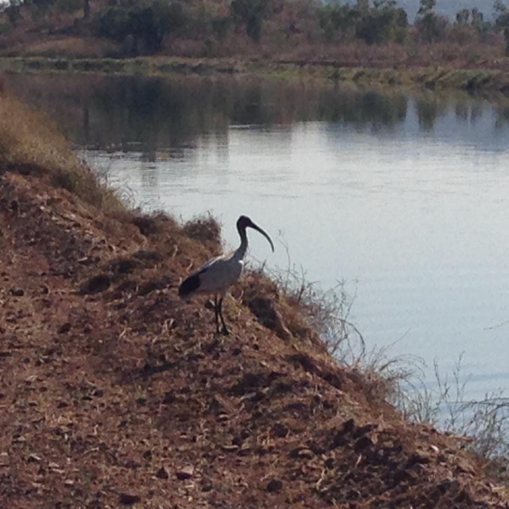 Plenty of bird watching at the many irrigation channels in Kununurra.