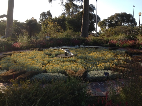 One of many beautiful gardens in kings Park seen in late winter/early spring.