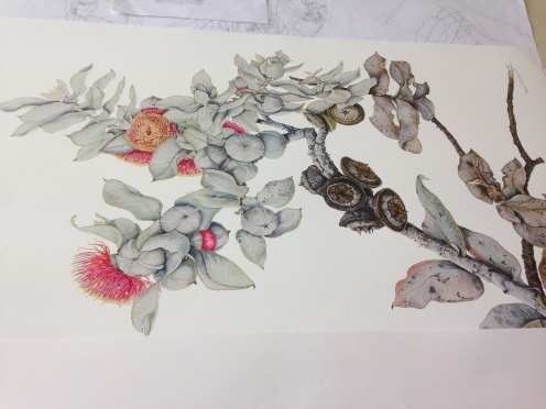 Working primarily in watercolor, one of Nilulinsky's botanical paintings in progress at her studio. Incredible!