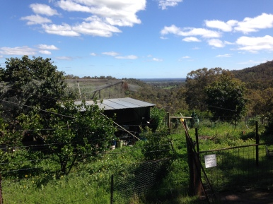 "Looking out at gardens and the ""chook"" house at Tom's farm. He supplies bountiful harvests of fresh eggs, fruits, vegtables, and herbs that will go into great dishes prepared by Gayl."